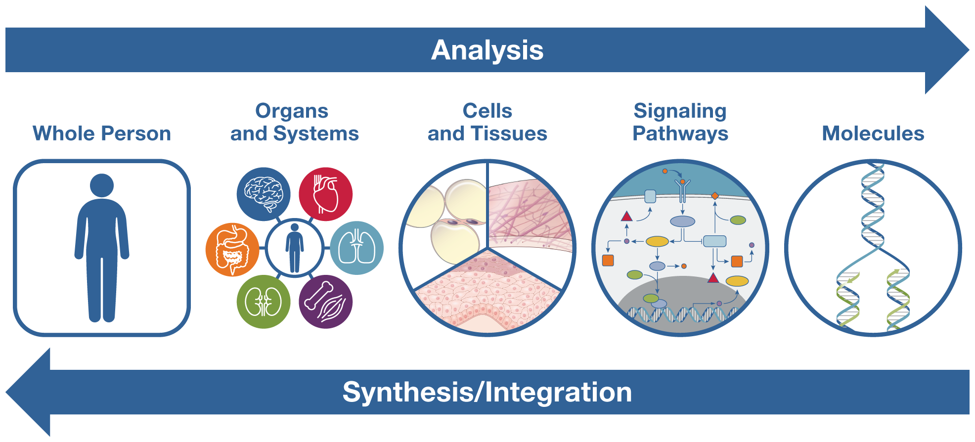 Analysis Synthesis Integration