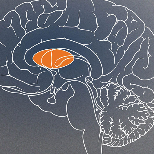 drawing of brain with insular cortex highlighted