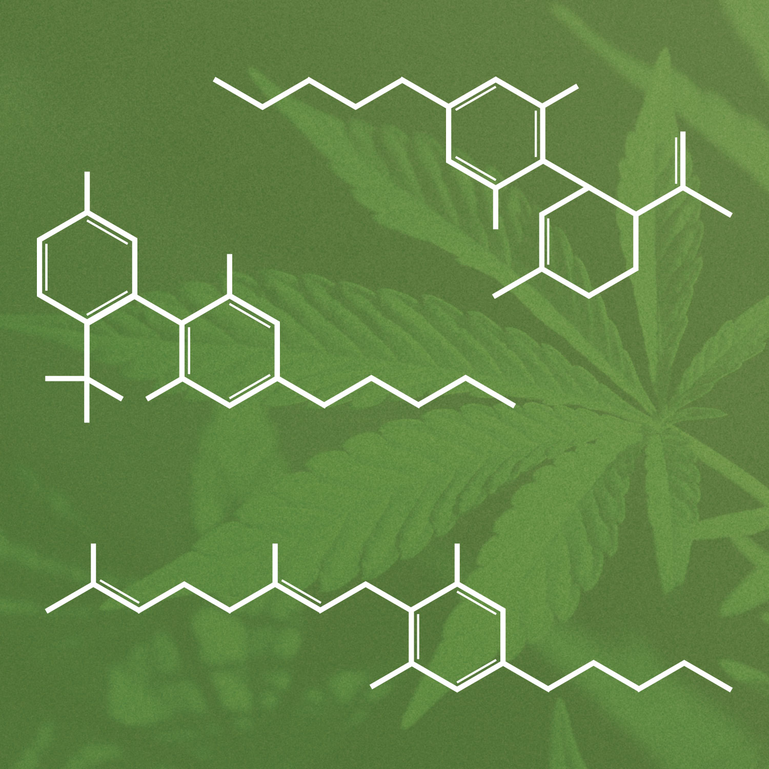Chemical structures for structures for cannabichromene, cannabinol, and cannabigerol overlay an image of the marijuana leaf.