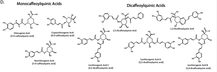 This figure shows a set of molecular structure samples of Caffeoylquinic acids