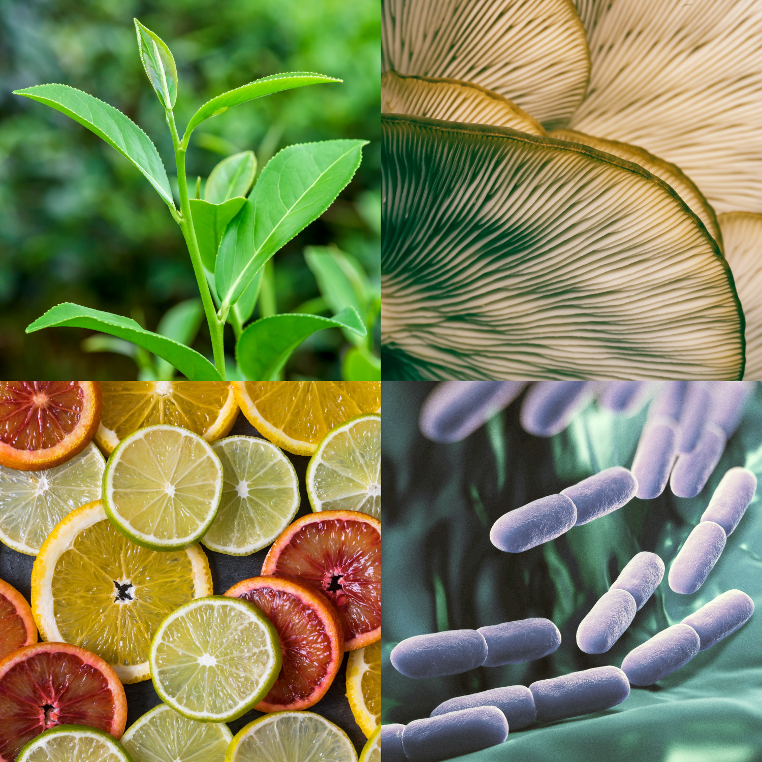 natural products collage