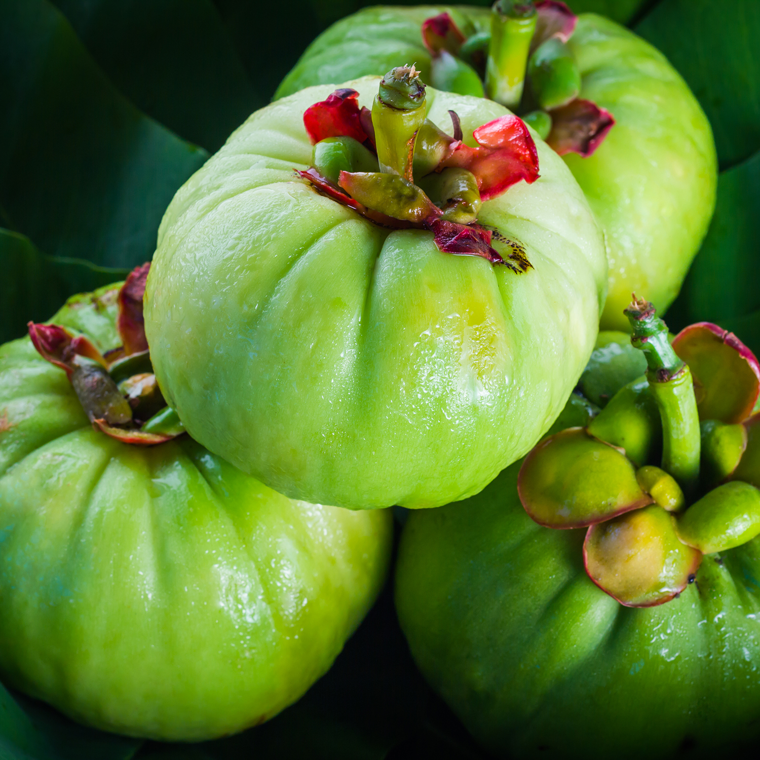 what s in garcinia cambogia formula