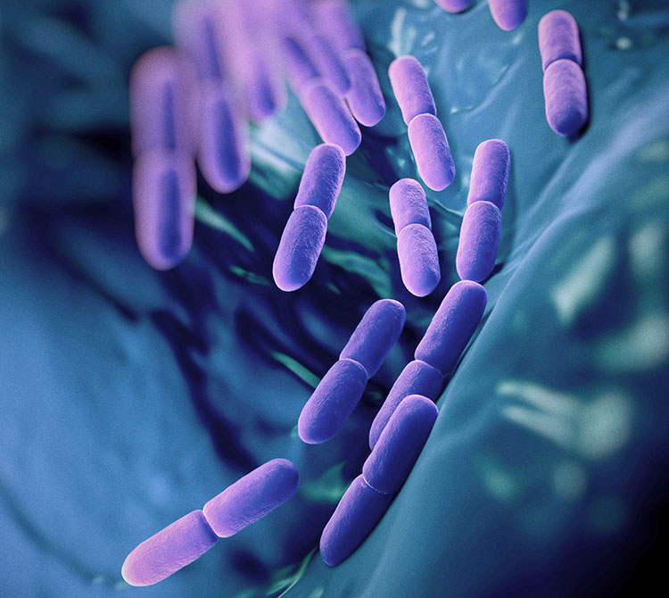 Bacteria in the gut
