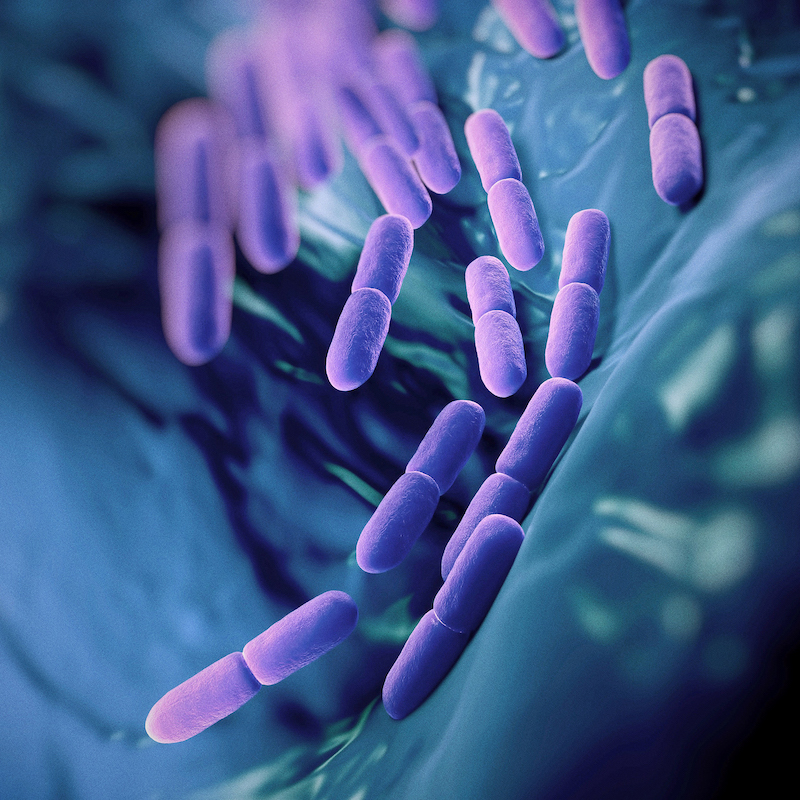 1. Myth: No bacteria can be good for you