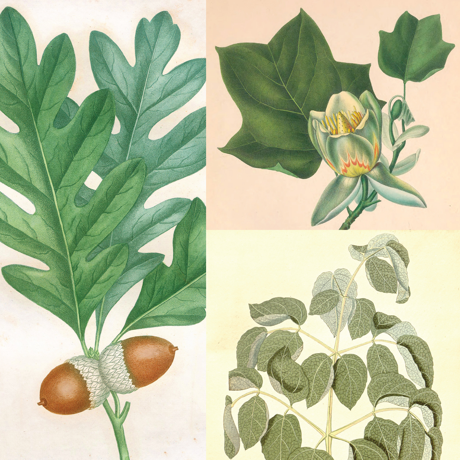 spotlight_civil war botanical collage-01.jpg