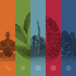 Collage of complementary and integrative health practices and natural products