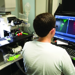 Photo of a researcher working on a computer in their lab.