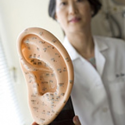Doctor holds model of ear acupuncture points.