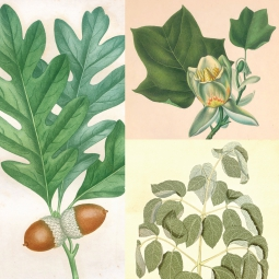 Civil War plant medicines