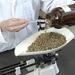 Herbalist weighing dried herbs.