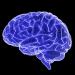 A 3d graphic representation of a brain.