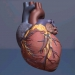 A 3d computer generated illustration of the human heart.