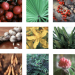 Collage of various herbs