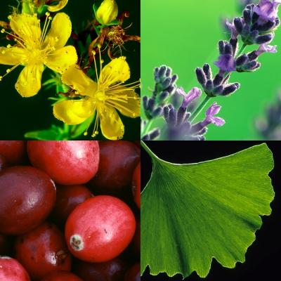 Herbs at a Glance   NCCIH