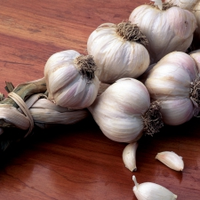 Garlic © Steven Foster