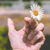Photo of a hand holding a flower in place of a cigarette